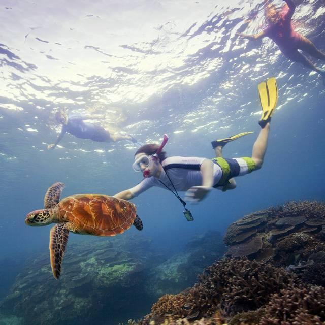 Voyage en Australie - La Grande Barrière de Corail
