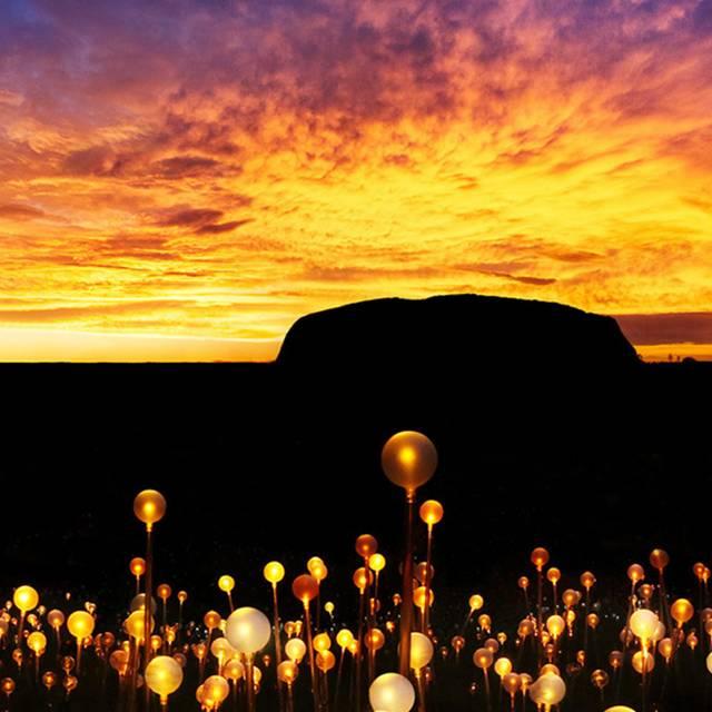 Voyage en Australie - Field of Light