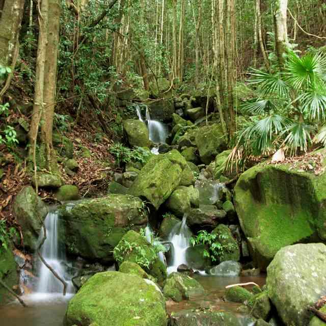 Voyage en Australie, forêt du Sud