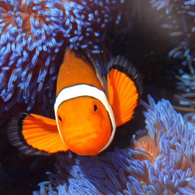 Voyage de noces en Australie - Grande Barrière de corail