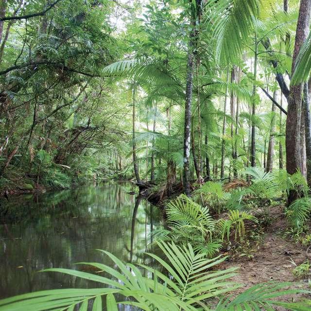Voyage en Australie - Forêt tropicale