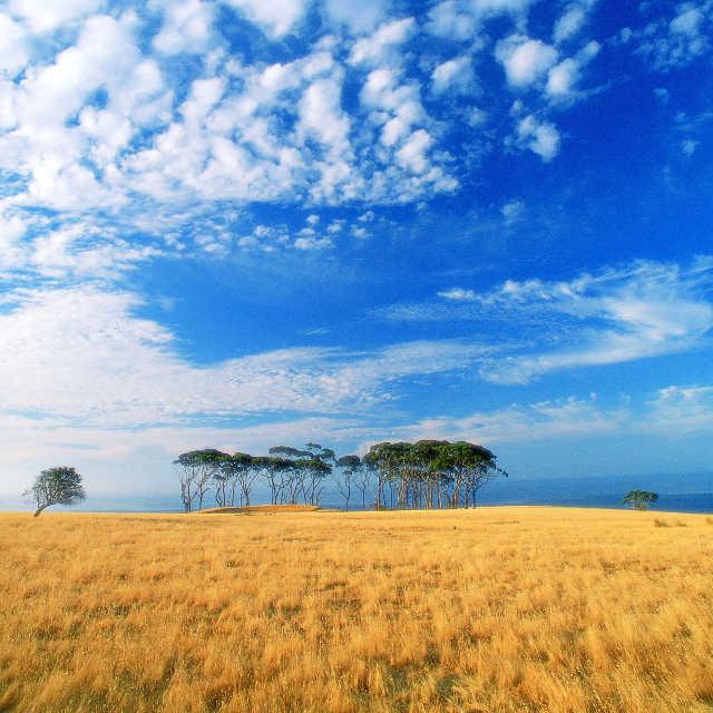 Kangaroo Island - Voyage en Australie