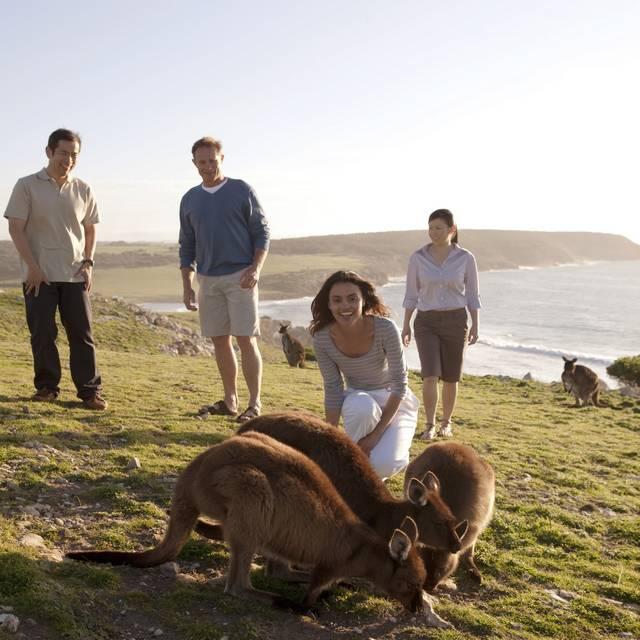 Voyage de noces en Australie - Kangarou Island