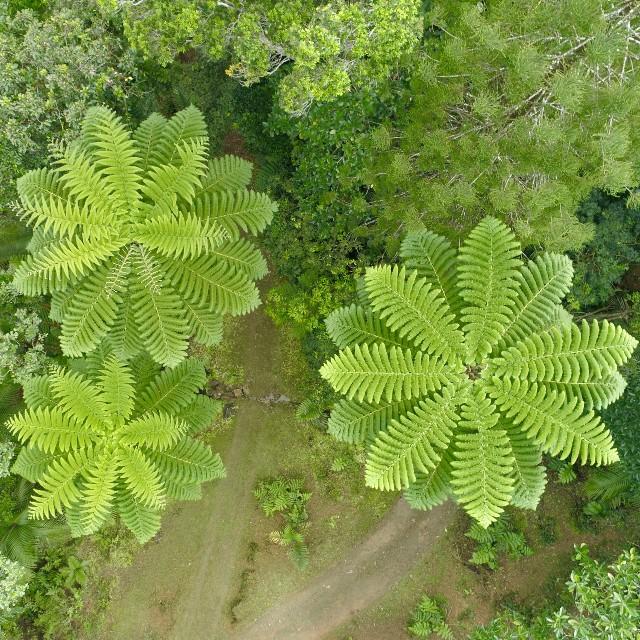 Voyage en Nouvelle Calédonie autrement - Parc des grandes fougères