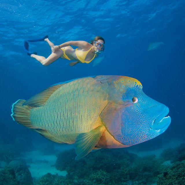 Grande Barrière de Corail, Cairns - Voyage en Australie