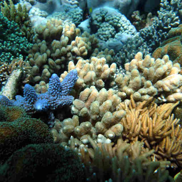 Grande barrière de corail - Voyage en Australie