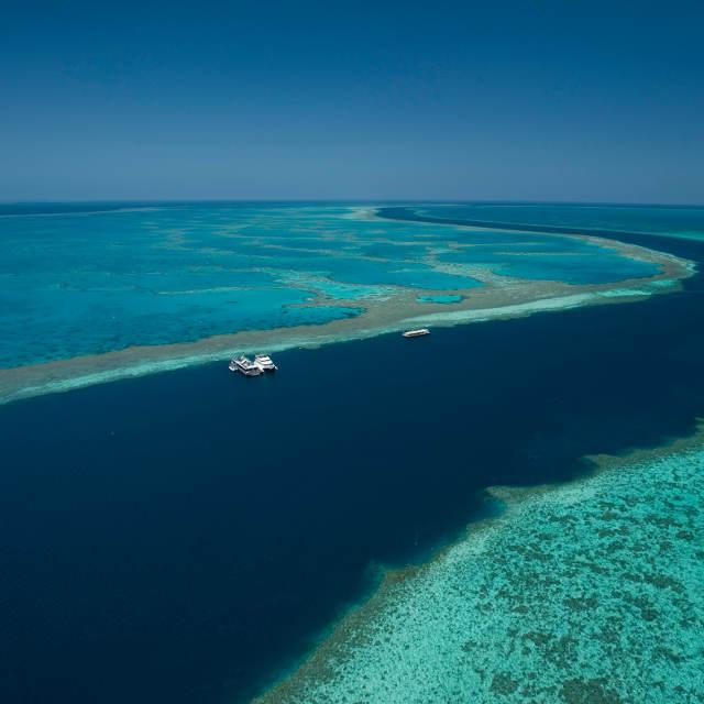 Reefsleep