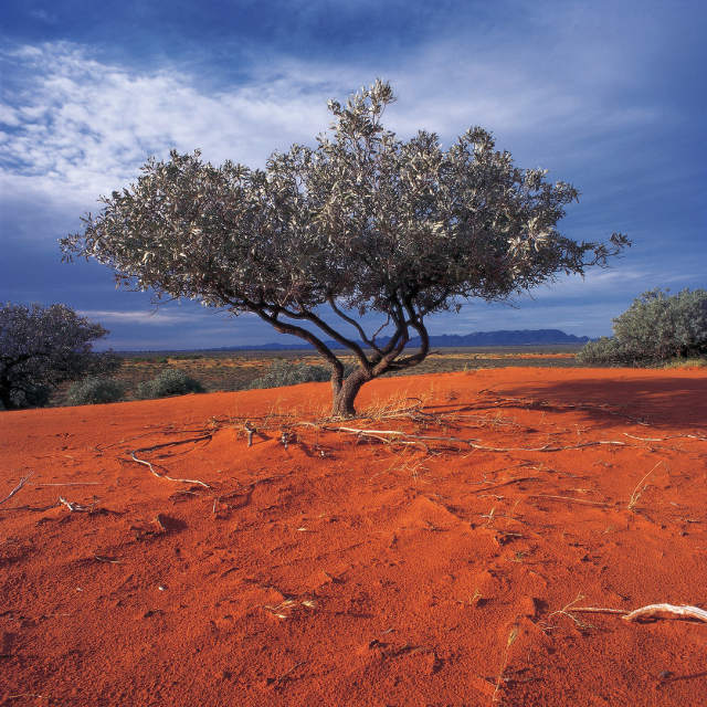 Voyage Australie - Flinders Ranges