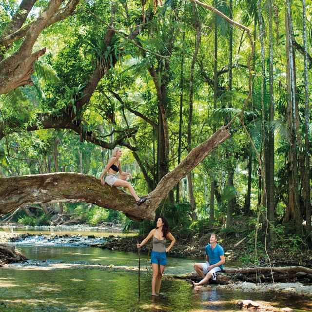 Autotour Australie - Forêt tropicale