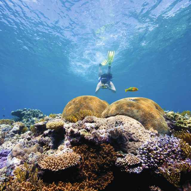Autotour Australie - Grande Barrière de Corail