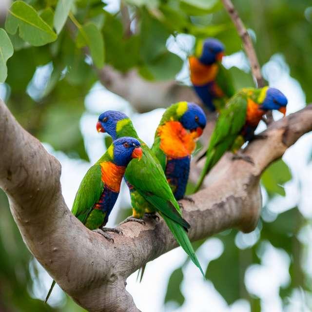 Hôtel Australie - Thala Beach Nature Reserve