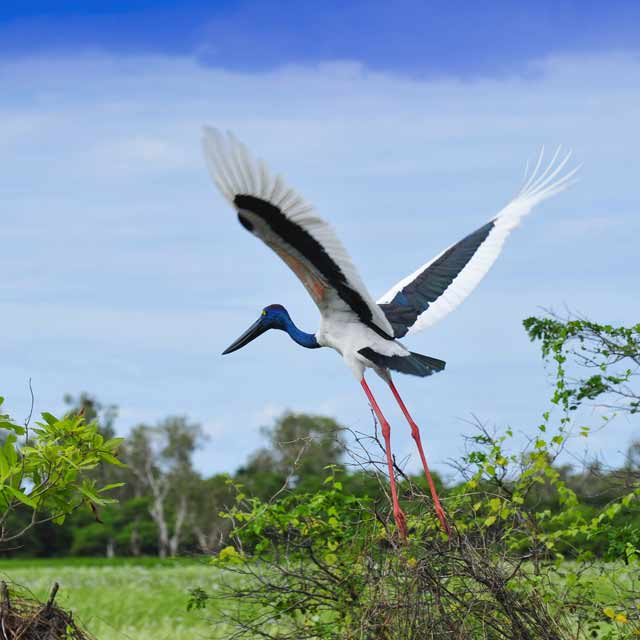 Oiseau kakadu