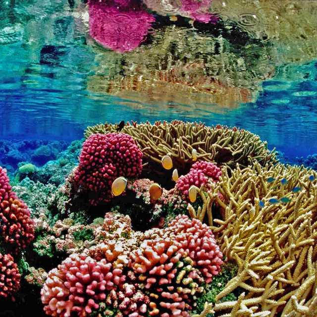 Voyage Australie - Grande Barrière de Corail