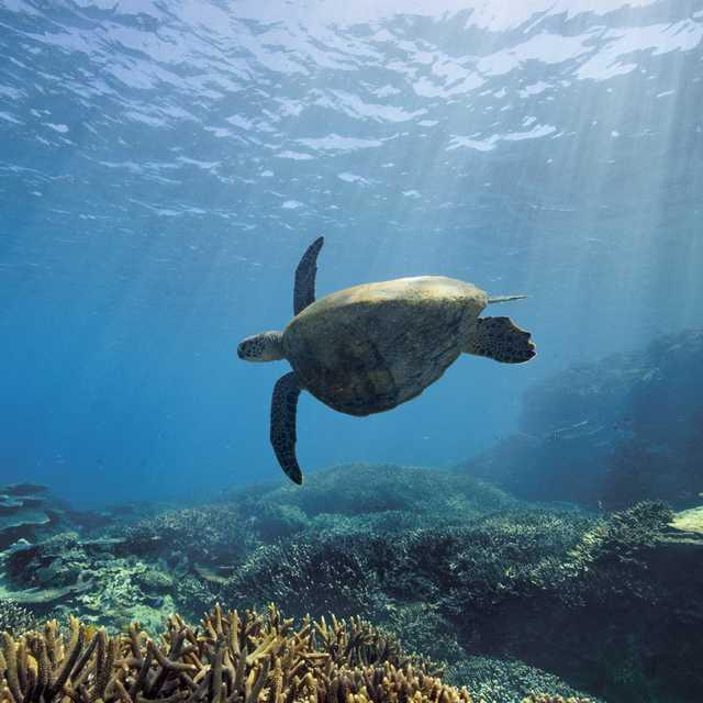 Voyage nature en Australie - Tortue
