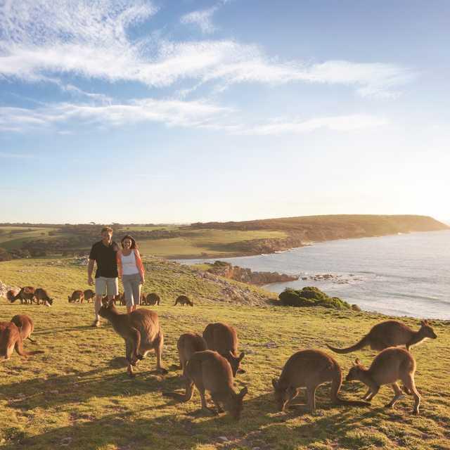 Voyage nature en Australie - Kangourous