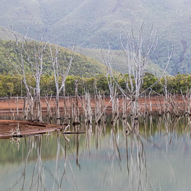 Voyage autotour en Nouvelle Calédonie - Bienvenue en Nouvelle Calédonie - Parc de la rivière bleue