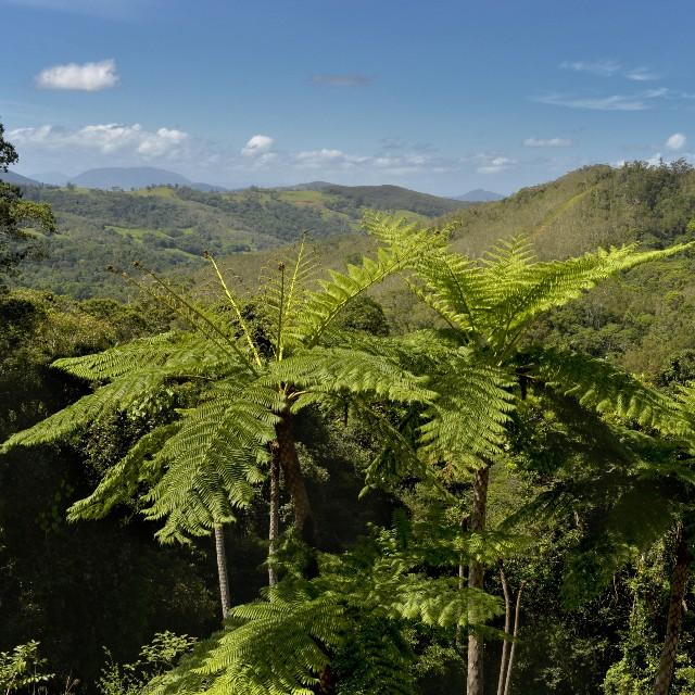 Voyage autotour en Nouvelle Calédonie - Bienvenue en Nouvelle Calédonie - Parc des grandes fougères
