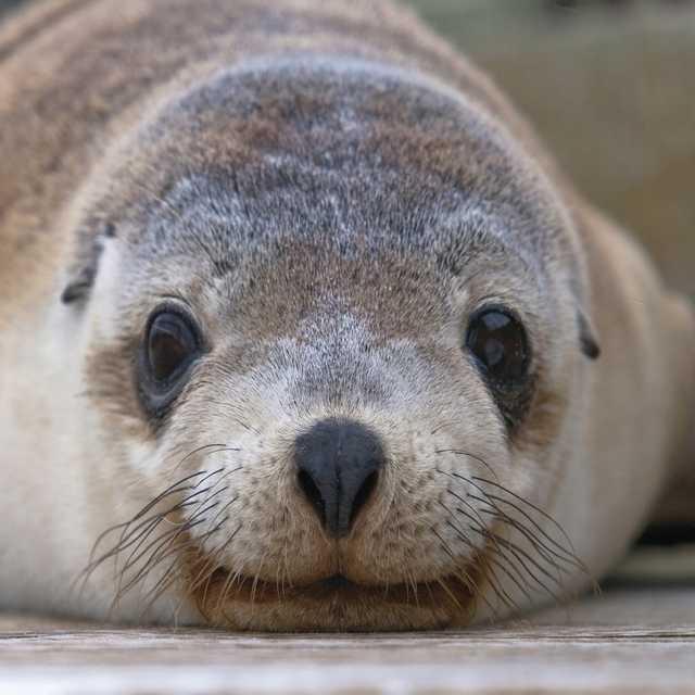 Voyage en Australie - Kangaroo Island
