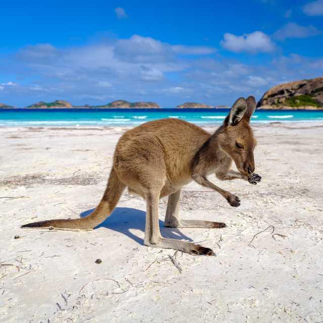 Voyage en Australie de l'ouest - Lucky Bay