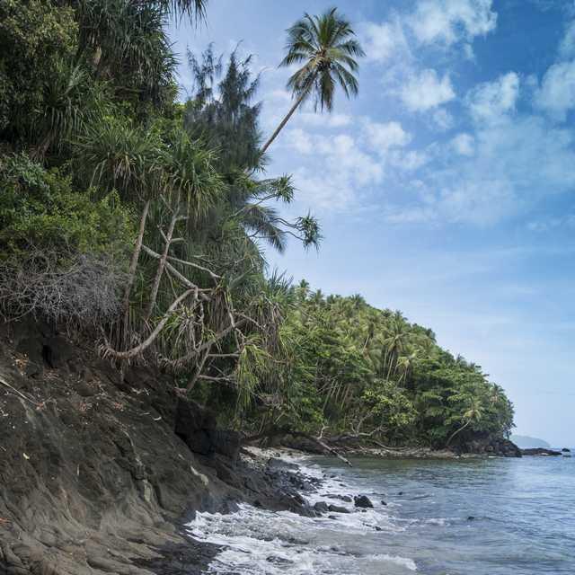 Voyage en Papouasie Nouvelle-Guinée - Cocotiers
