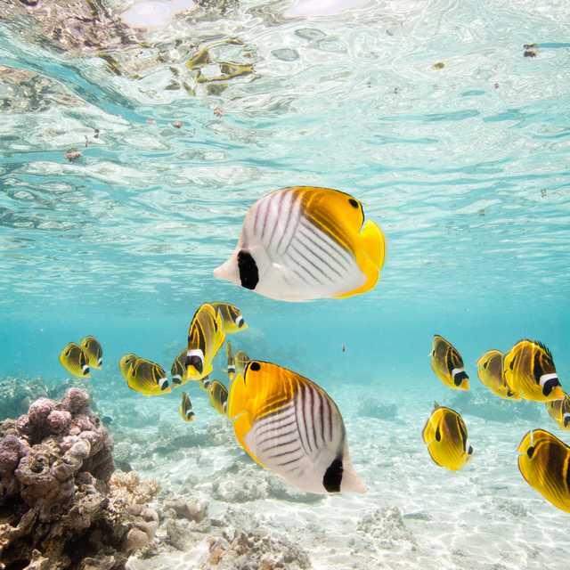 Voyage aux Îles Cook - poissons colorés
