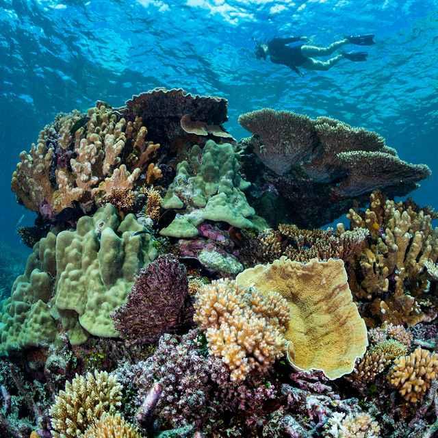 Hôtel sur la Grande Barrière de corail - Wilson Island