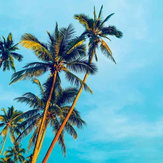 Voyage aux îles Fidji - Sigatoka