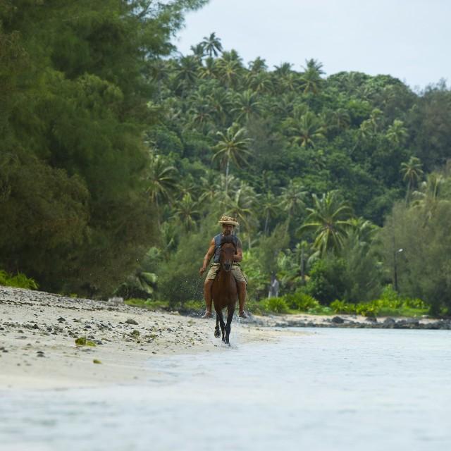 Voyage à la carte Archipel des Australes - cheval sur la plage Rurutu