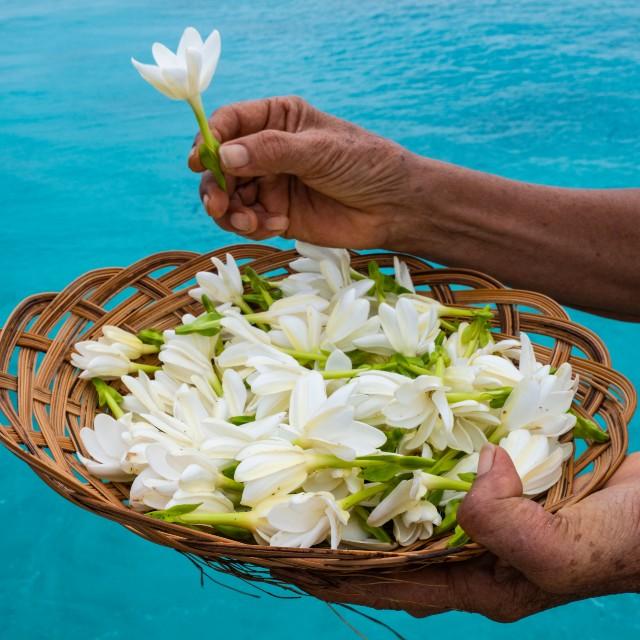 Voyage à la carte en Polynésie Française - Polynésie Enchanteresse - Fleur de Tiare