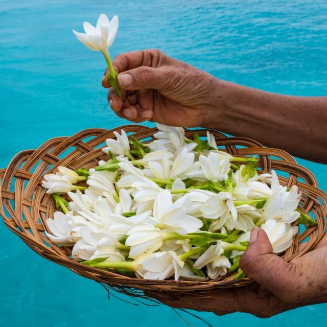 Voyage à la carte Tahiti et ses îles - Fleurs de Tiare