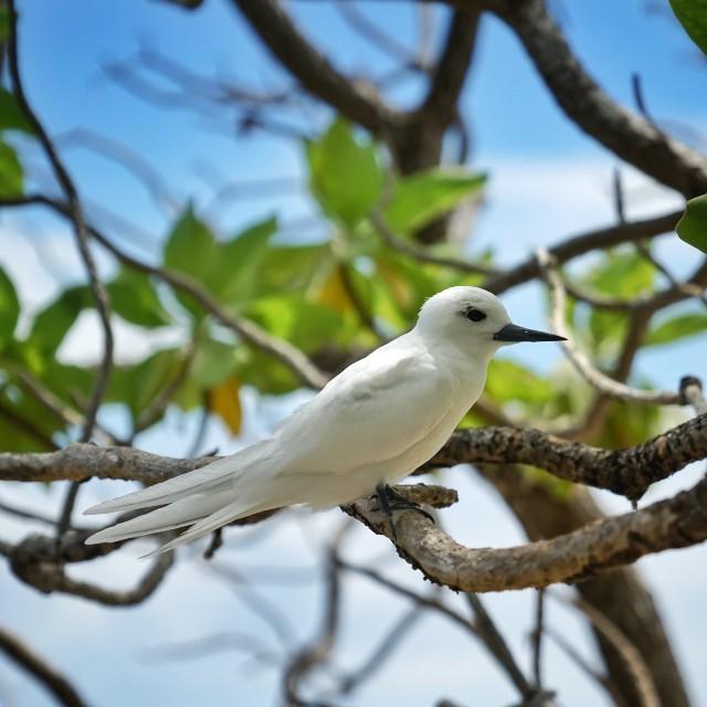 Voyage à la carte en Polynésie Française - Polynésie Enchanteresse -Oiseau dans les Tuamotu